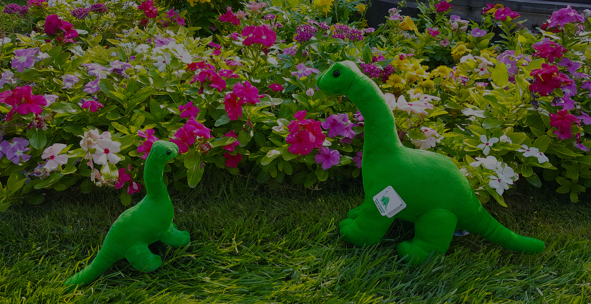 <span class='s5_boldfont'>Aud the Dinosaur Swag</span> Available Online!